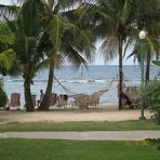 grand_lido_jamaica_coconut_trees