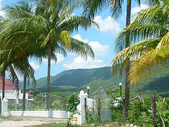 Jamaica Real Estate: Yard with Coconut Trees