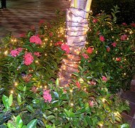 Christmas in Jamaica - Flowers with Lights by Gailf548