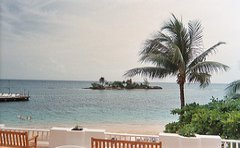 couples_resort_jamaica_palm_tree