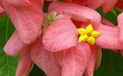 jamaican_flowers_17