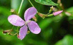 jamaican_flowers_21