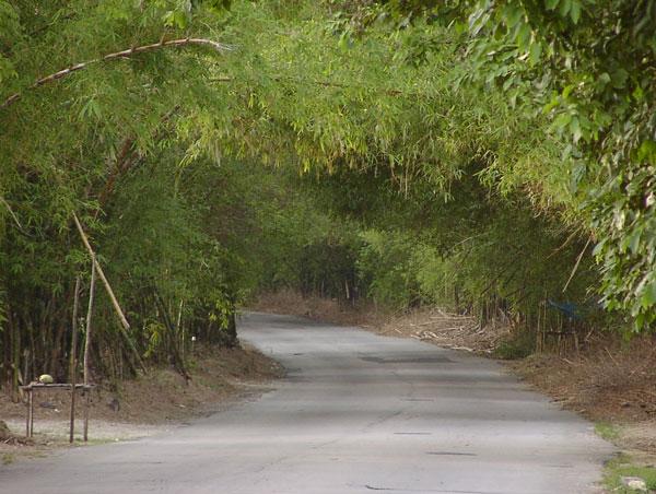 historic holland bamboo avenue
