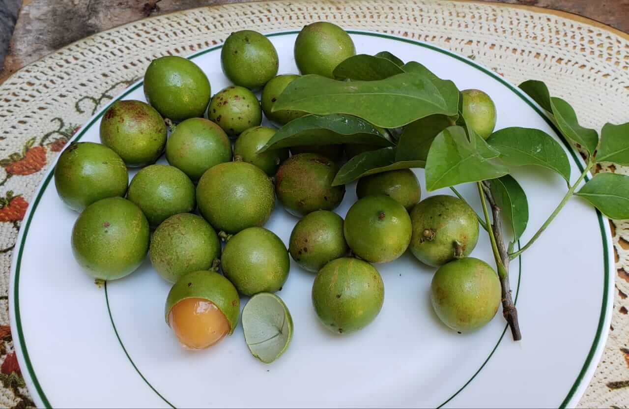 jamaican guineps