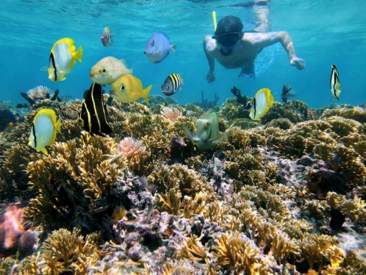 snorkeling in negril