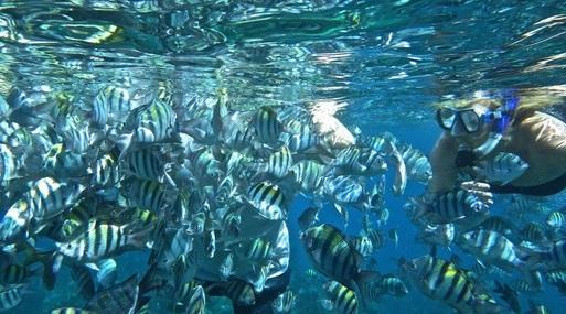 snorkeling_in_jamaica_at_secret_reef_barrett_adventures