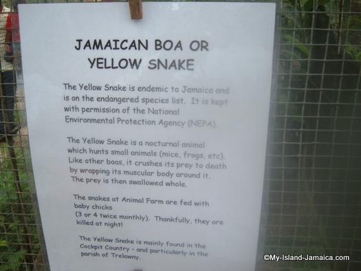 animal_farm_jamaican_boa