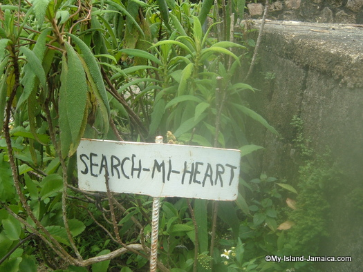 animal_farm_2007_jamaican_search_mi_heart