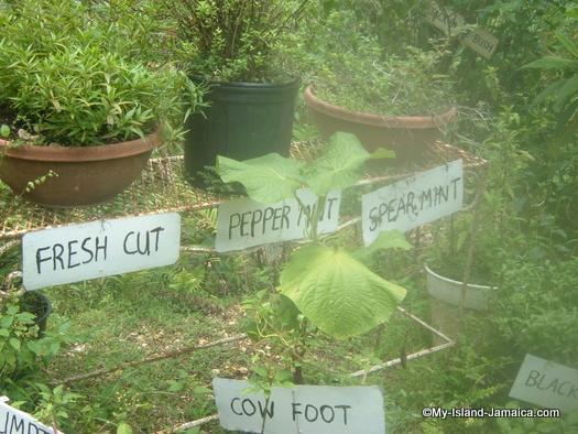 animal_farm_jamaican_teas