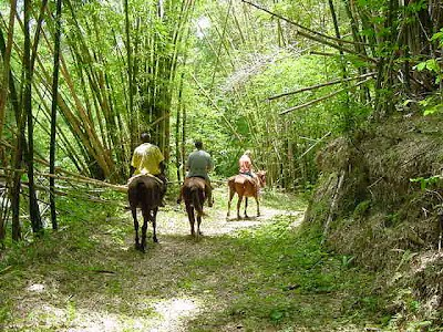jamaica shore excursions