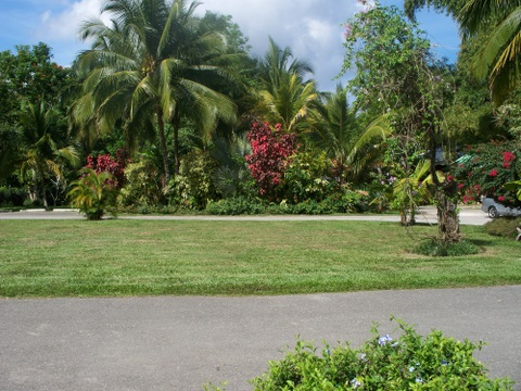 info on Jamaica: lawn