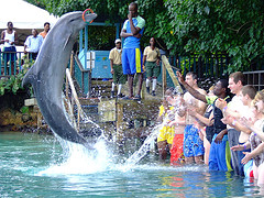 dolphin_jumping_up_with_crowd at Dolphin Cove