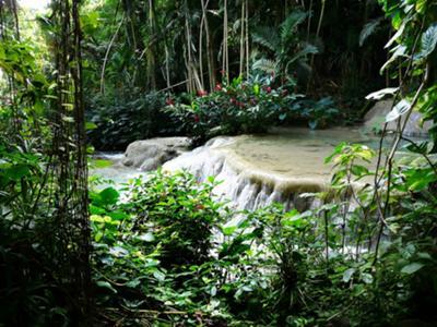 Dunn's River Tropcal Rainforest