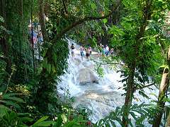 trees at dunns river falls jamiaca