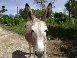 family_reunion_december_2008_donkey