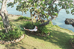 grand_lido_jamaica_tree