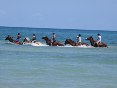 <b><font color=red>Photo Contest Entry #12</font></b><br>Hooves Horseback riding trip