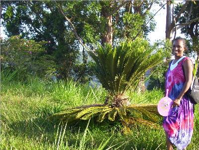 A Jamaican Plant