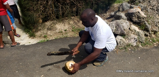 jamaica_road_trip_wellesley_cutting_coconut