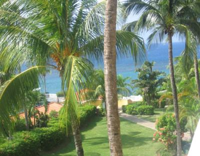 <b>Photo Contest Entry #6:</b> <br>Jamaican Palm Trees