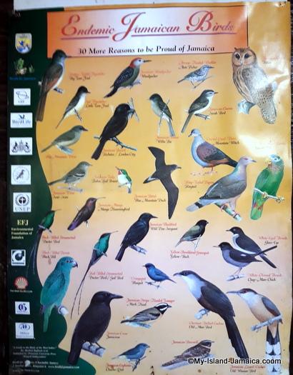 jamaican_birds