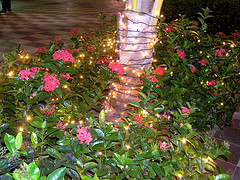 hristmas in Jamaica - Flowers with Lights by Gailf548