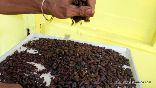 jamaican_cocoa_beans_roasted