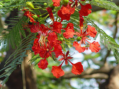 jamaican_flowers_16