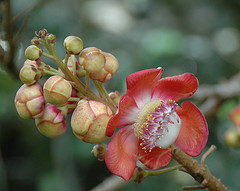 jamaican_flowers_19
