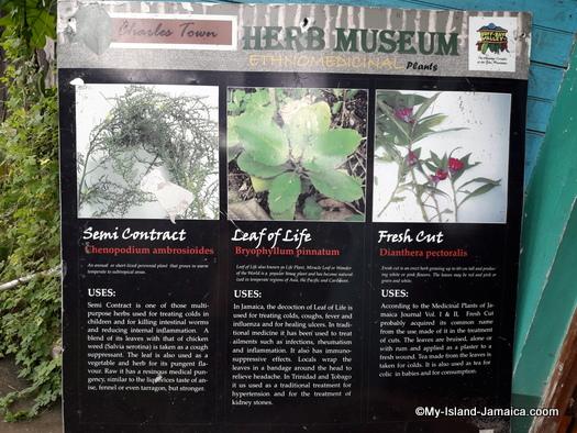 jamaican_maroon_charlestown_visit_herb_museum