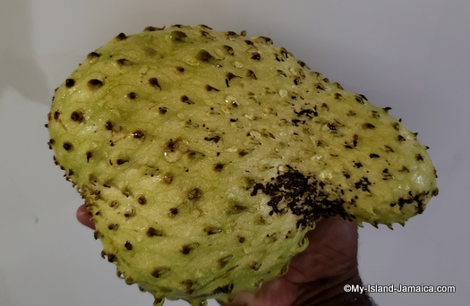 Jamaican soursop ripe for juice