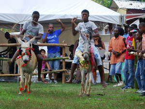 Donkey Race in 2012