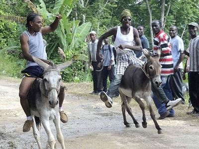 Donkey Race in Jamaica