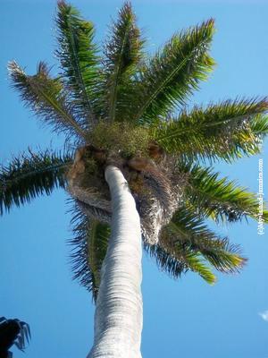 Palm Sunday in Jamaica
