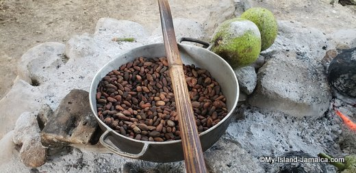 Indigenous Jamaican Cocoa (chocolate) Beans