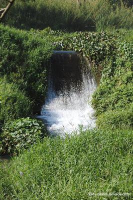 Stream In Bog Walk, Jamaica
