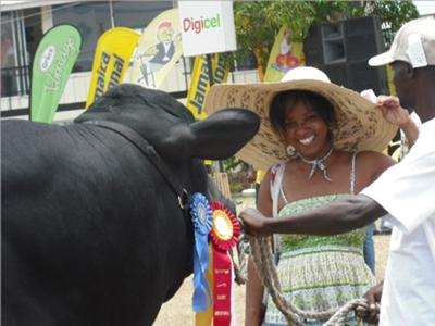 <b>Photo Contest Entry #4</b><br>The Champion Bull<br>Denbigh Agricultural Show 2009
