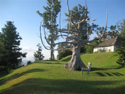 The Tree at Cinchona Gardens