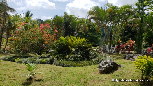 the botanical garden at Winston barr in maroon town jamaica