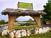 jamaica_swamp_safari_village_falmouth_trelawny