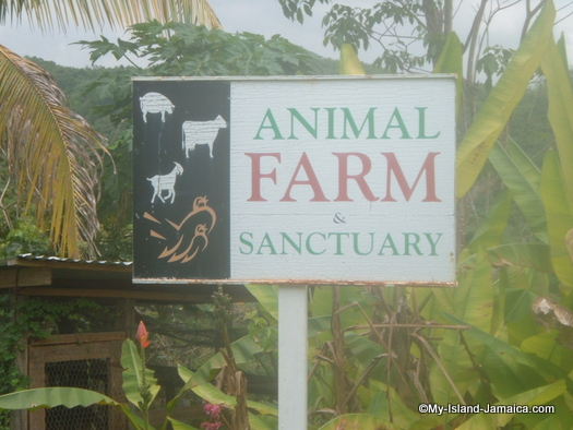 animal_farm_jamaica_sign