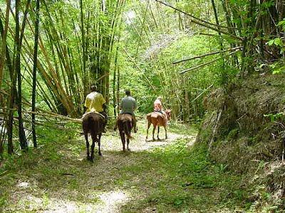 jamaica shore excursions