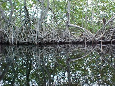 <b> <font color=red>Photo Contest Entry #1</font></b><br>Black River Reflection