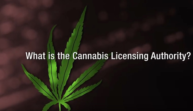 what is the cannabis licensing authority