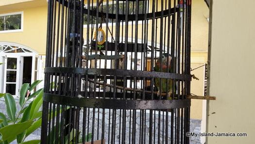 cheap_hotels_in_montego_bay_sea_gardens_resort_parrot_bird