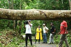 Uprooted Tree lying across road