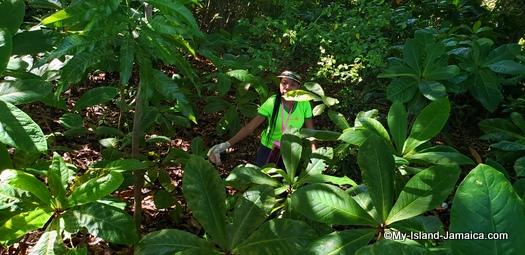 international_coastal_cleanup_day_jamaica_little_lady