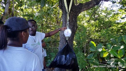 international_coastal_cleanup_day_jamaica_weighing