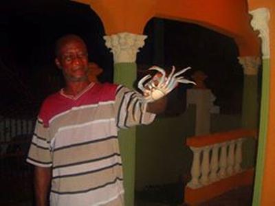 Jamaica Land Crabs