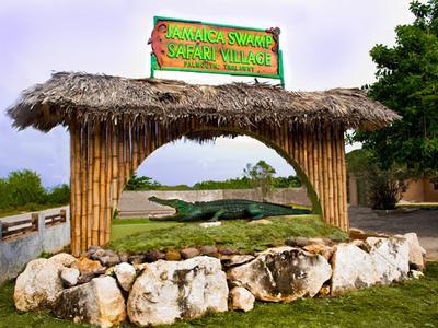 The Jamaica Swamp Safari In Falmouth